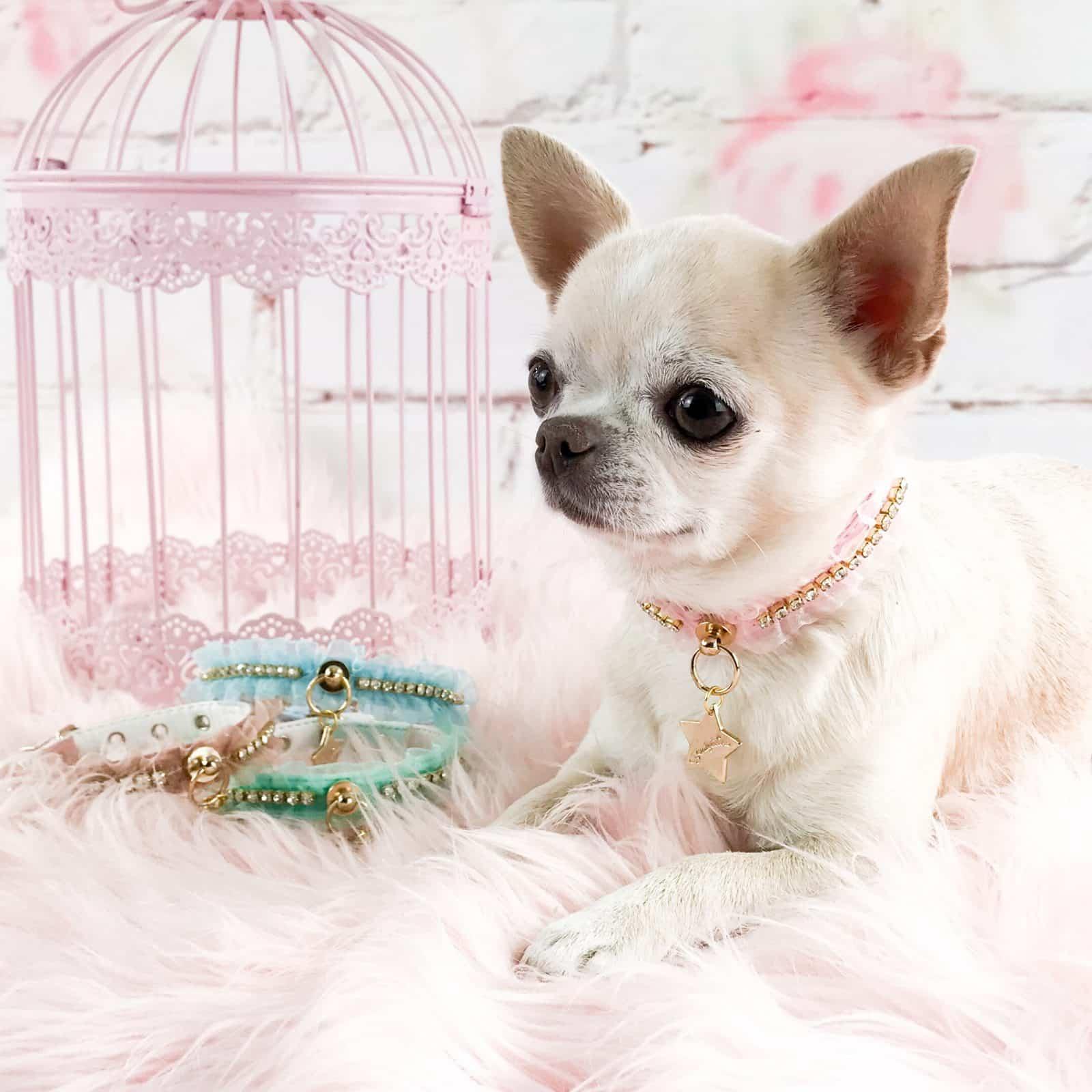 El Armario De Sugar El Armario De Sugar Boutique Para Perros Toy